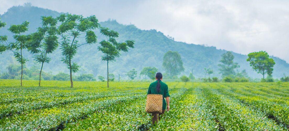 سازمان ملل خواستار آینده ای سبز برای جهان پسا کرونا شد