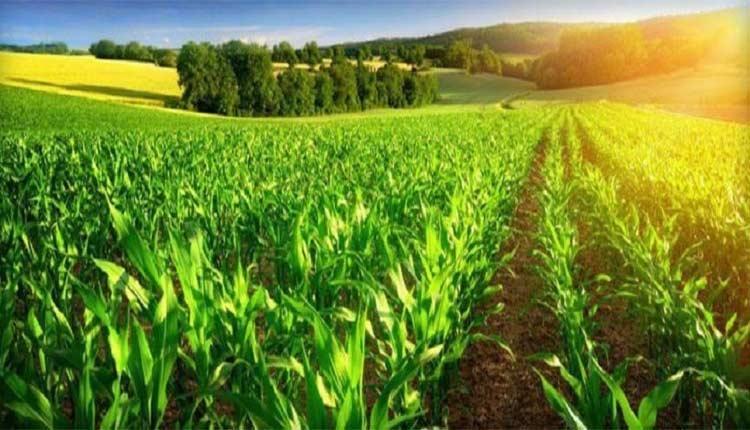ایده های پولساز کشاورزی؛ 40 ایده ناب و کاربردی